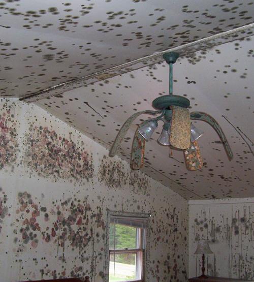 Bedroom-Fan-Mold-web.jpg
