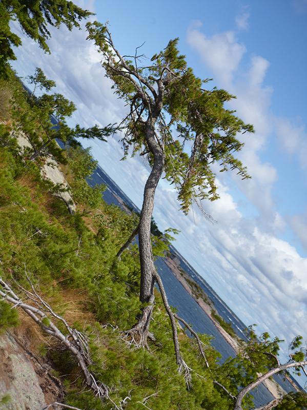 Tree Correction #2