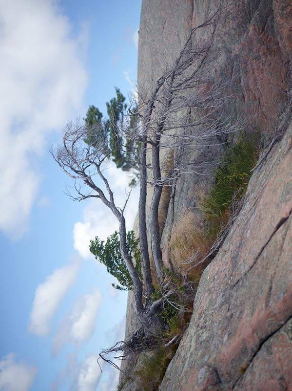 Tree Correction #6