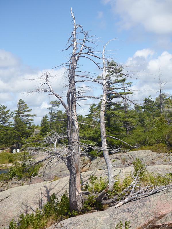 Tree Correction #7