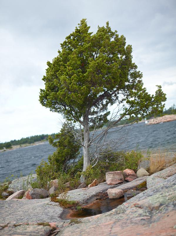 Tree Correction #19