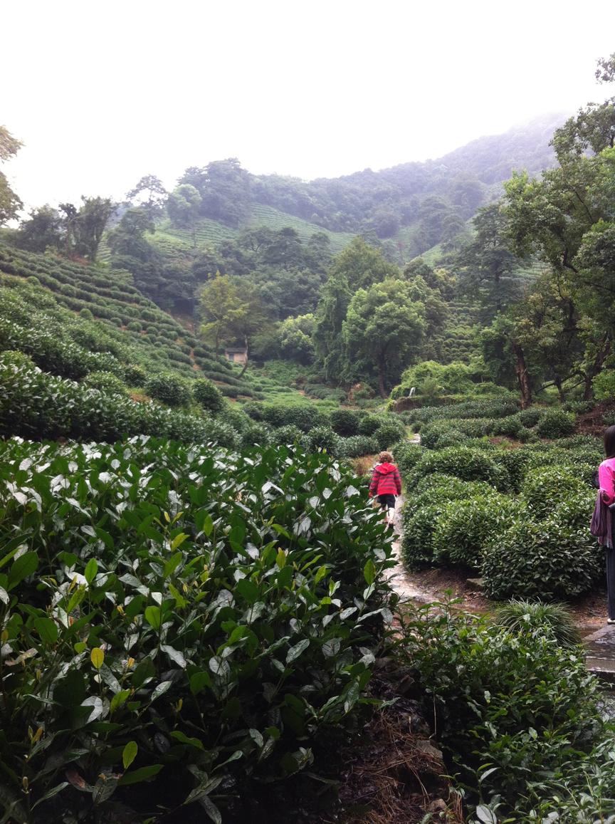 Tea terraces at Longjing 1
