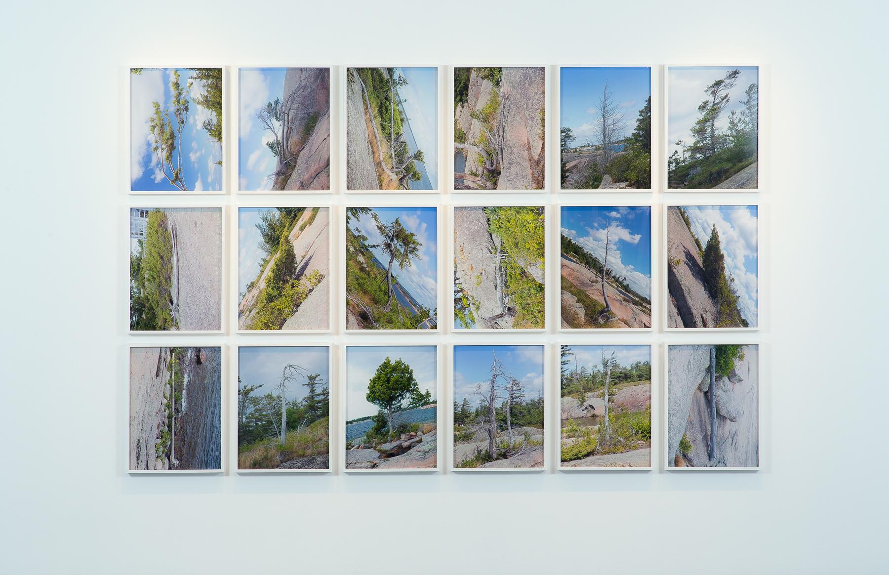 Tree Corrections, 2013, 18 Chromogenic Prints, 18x24 inches each