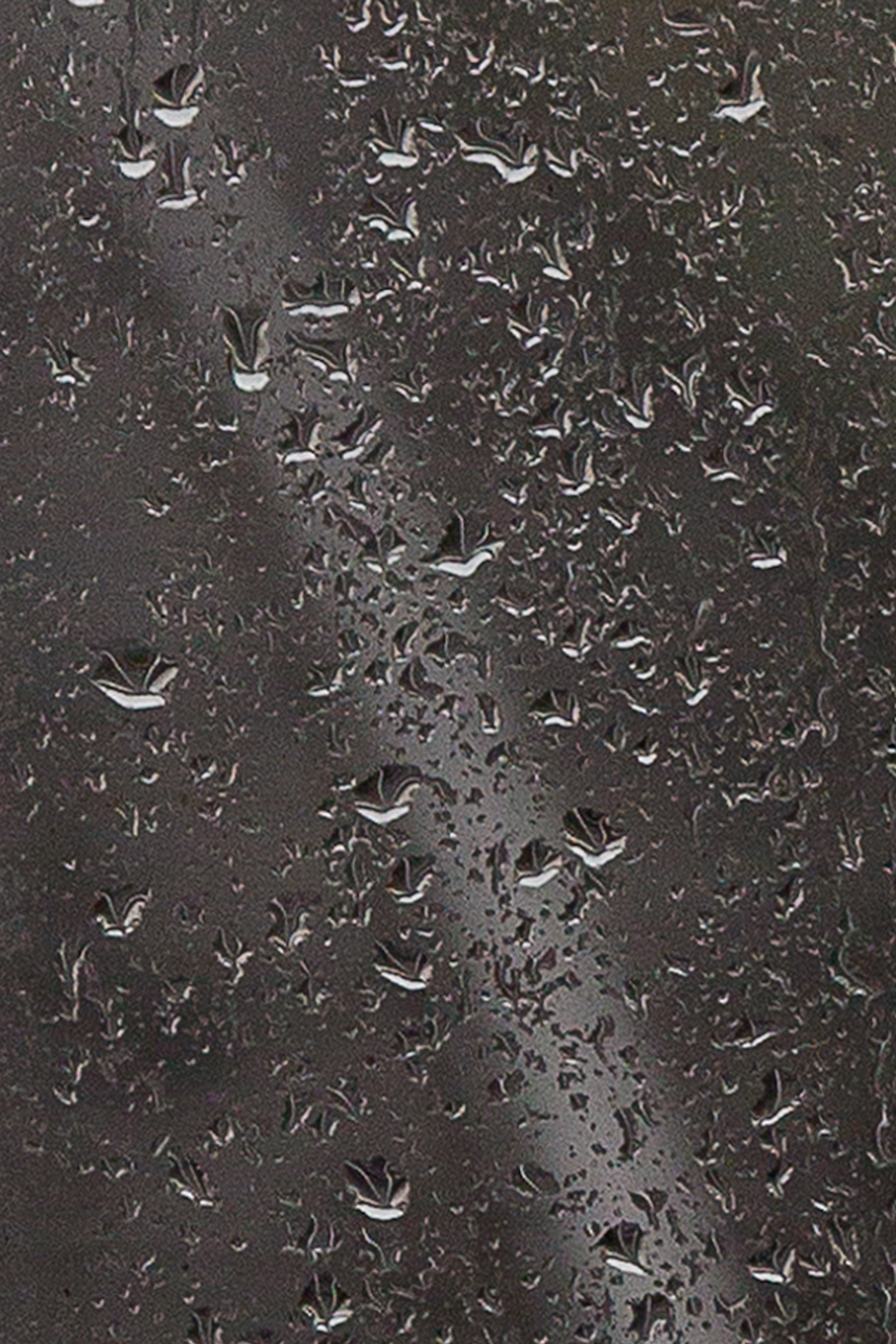(T)RainDETAIL.WEB.jpg