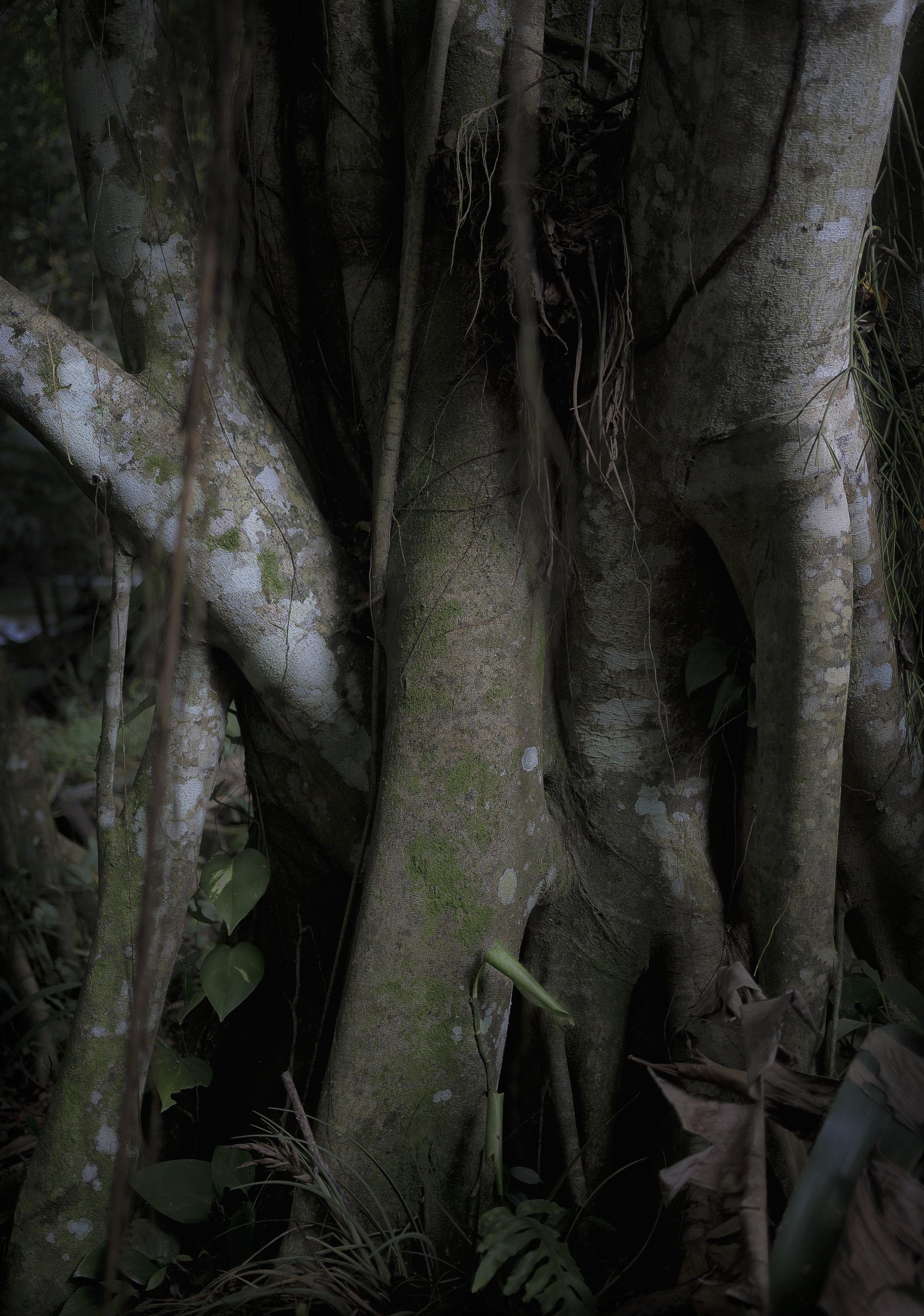 Untitled Rainforest (Jamaica), 2018