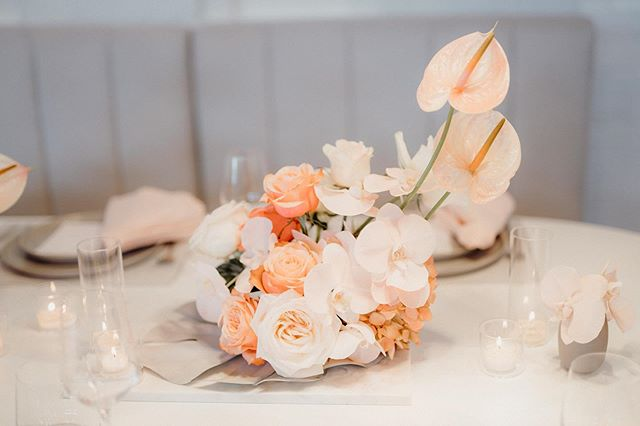 Just peachy 🍑  Photo | @amanda_thomas_photography  Furniture | @darbyandgrey  Florals + Styling | @libertyeventstyling  #peach #libertyeventstyling #nzweddings #eventstylist #eventstyling #weddingdecor #weddinginspiration