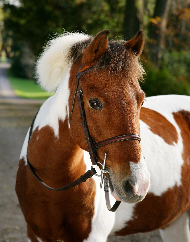 jess_pony_1355.jpg