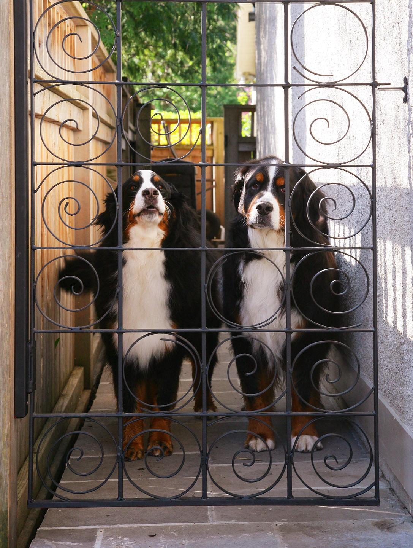 john_dogs_4811.jpg