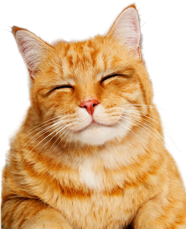 vet_service_Cat.jpg