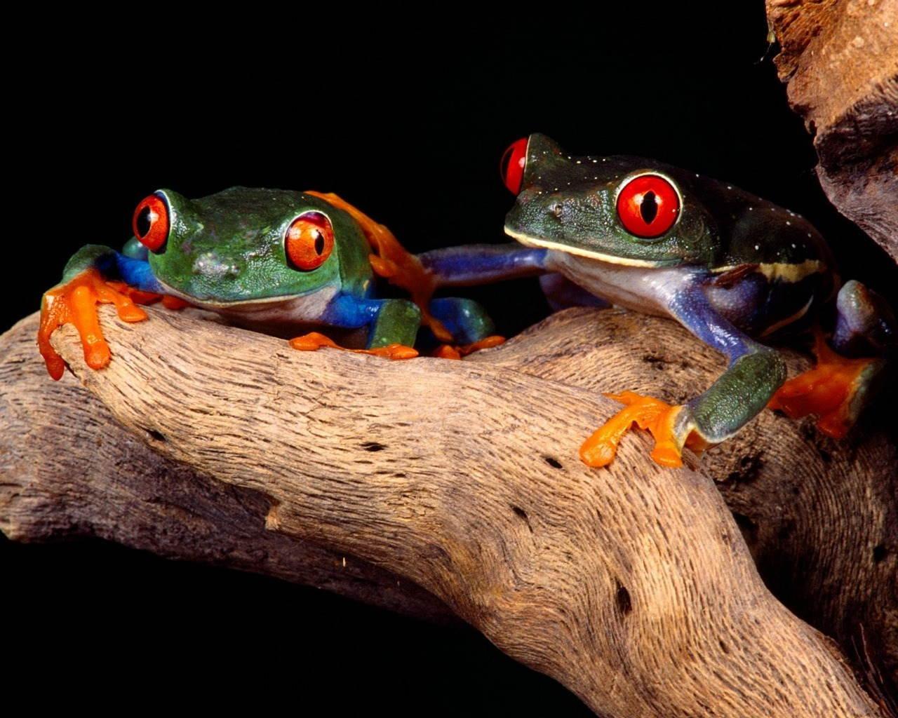 25-Most-Beautiful-Animals-Photography-StumbleUpon-6.jpg