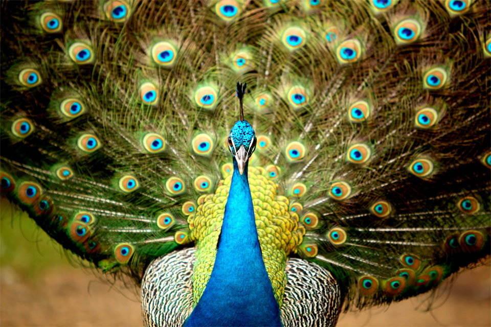 25-Most-Beautiful-Animals-Photography-StumbleUpon-5.jpg