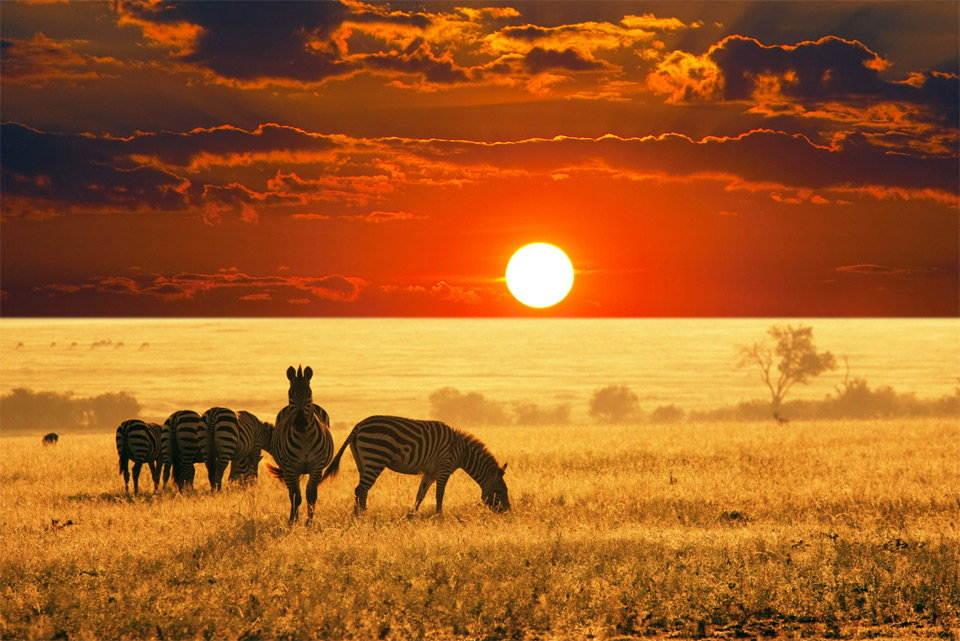 25-Most-Beautiful-Animals-Photography-StumbleUpon-15.jpg