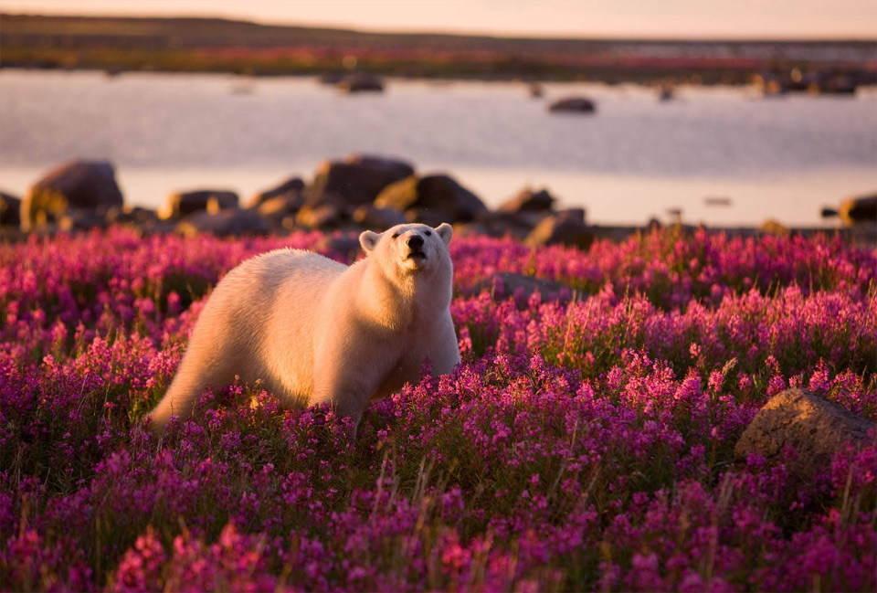 25-Most-Beautiful-Animals-Photography-StumbleUpon-22 - Copy.jpg