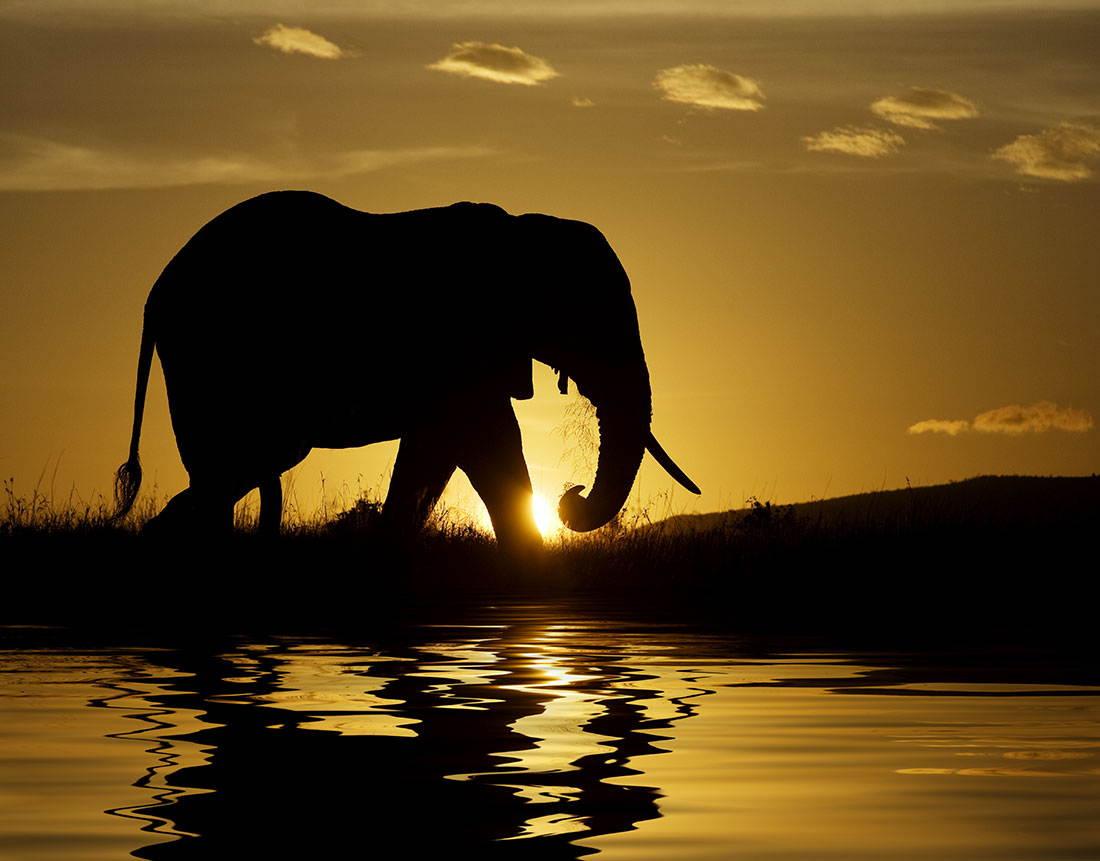 25-Most-Beautiful-Animals-Photography-StumbleUpon-20.jpg