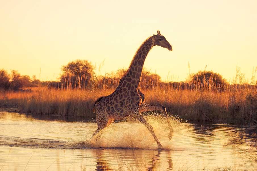 Beautiful-animals-photographu-stumbleupon-20 - Copy.jpg