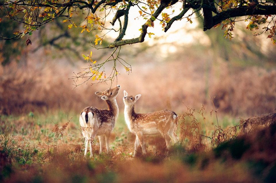 Beautiful-animals-photographu-stumbleupon-27 - Copy.jpg