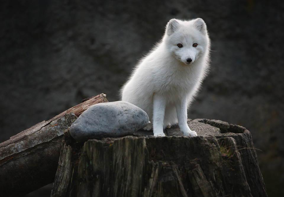 25-Most-Beautiful-Animals-Photography-StumbleUpon-8.jpg