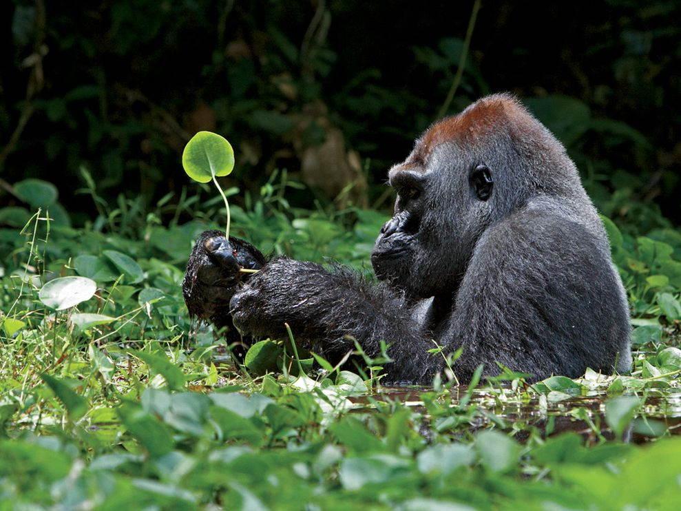 25-Most-Beautiful-Animals-Photography-StumbleUpon-9 - Copy.jpg
