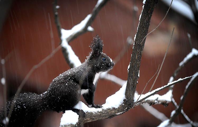 25-Most-Beautiful-Animals-Photography-StumbleUpon-7.jpg