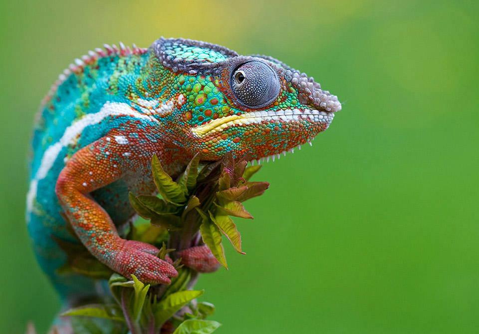 25-Most-Beautiful-Animals-Photography-StumbleUpon-2.jpg