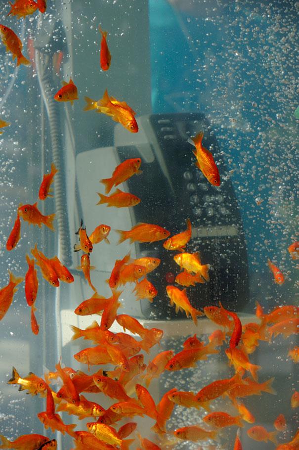 goldfish-phone-booth-tanks-kingyubo-4.jpg