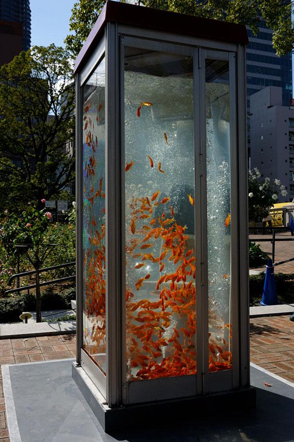 goldfish-phone-booth-tanks-kingyubo-5.jpg
