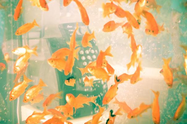 goldfish-phone-booth-tanks-kingyubo-8.jpg