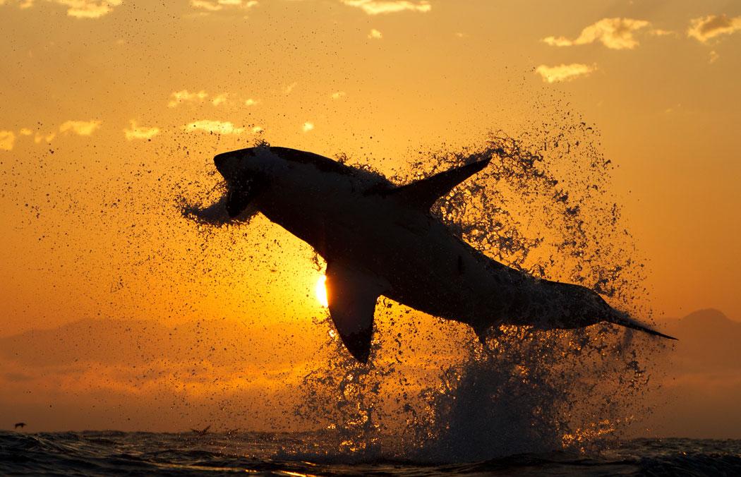shark-jumping.jpg