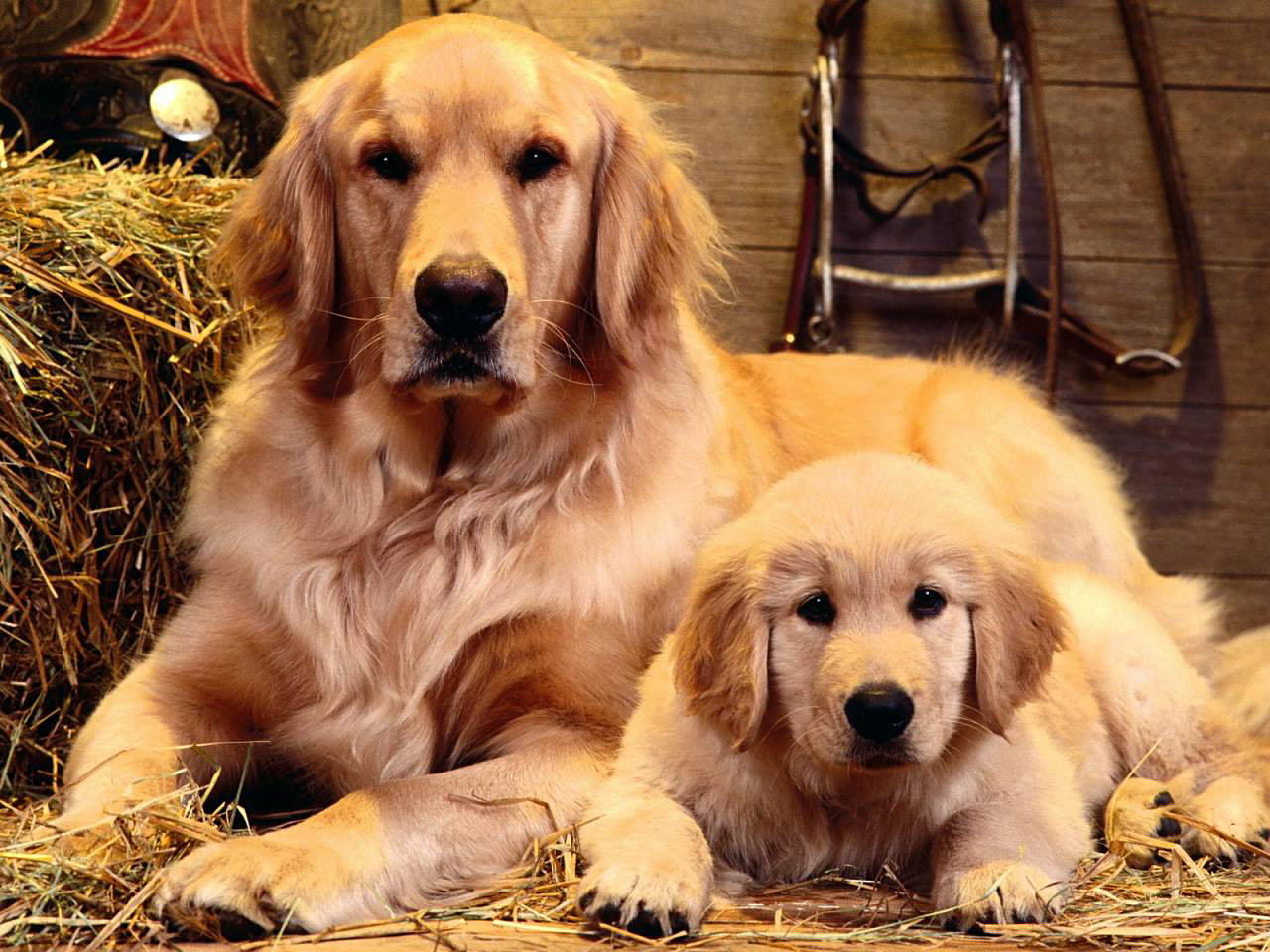 free_wallpaper_of_a_mother_dog_and_her_baby.jpg