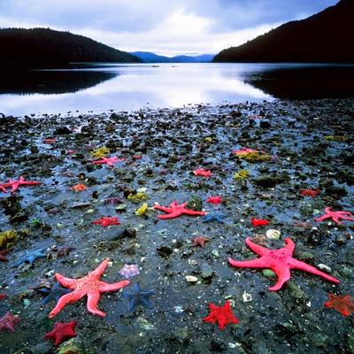 1 Starfish Colony West Coast New Zealand.jpg