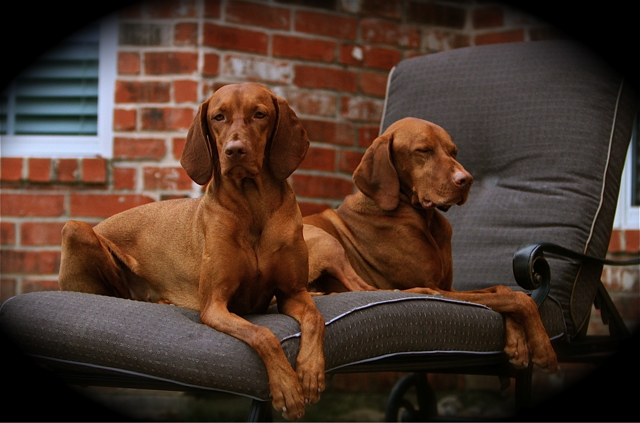 Tanner and Ruger 2012.jpg