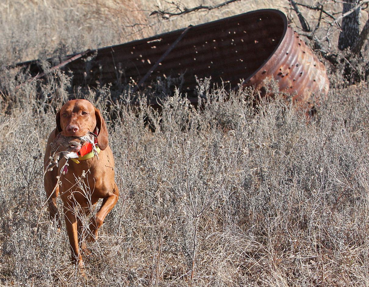 Tanner making a retreive 1 22 2011.jpg
