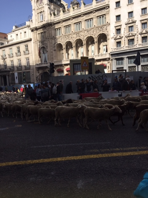 Sheep Takeover Maaaadrid