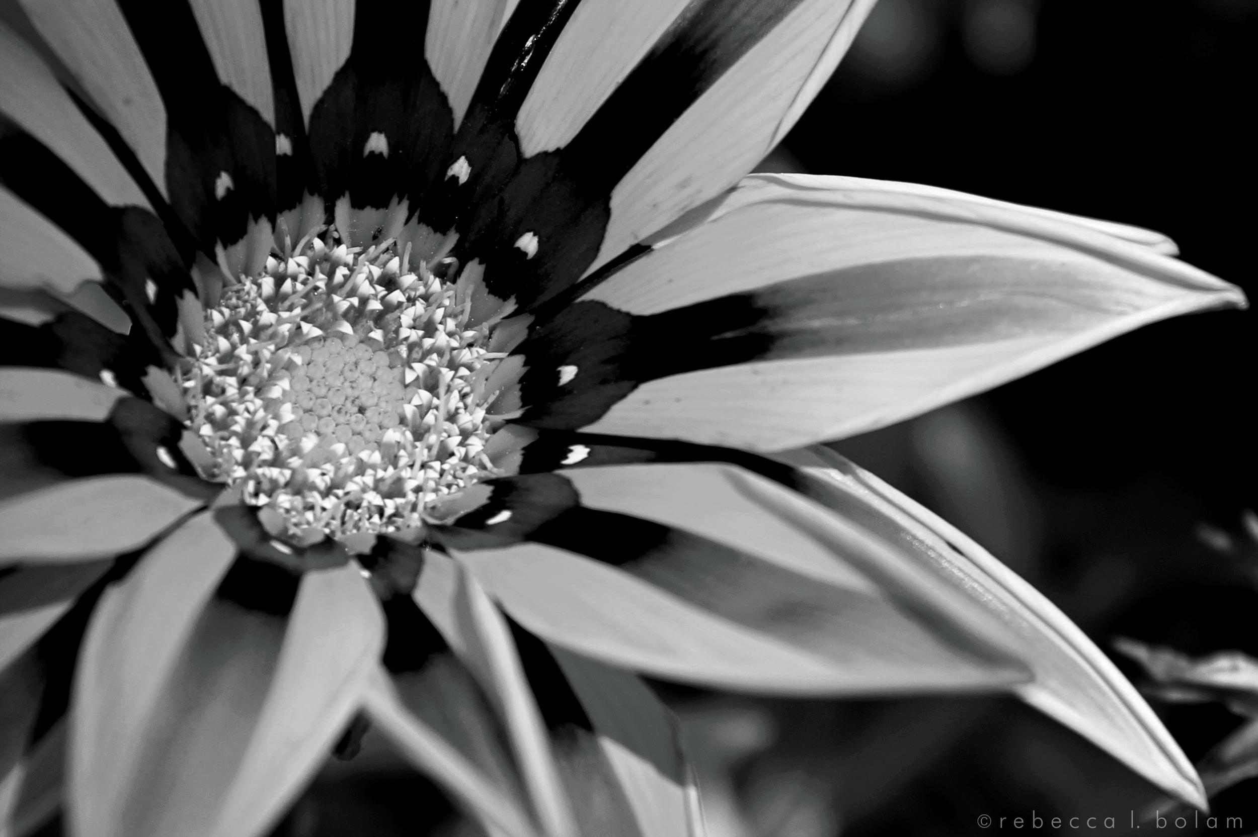 Wildflower yellow and orange 2 sm.jpg