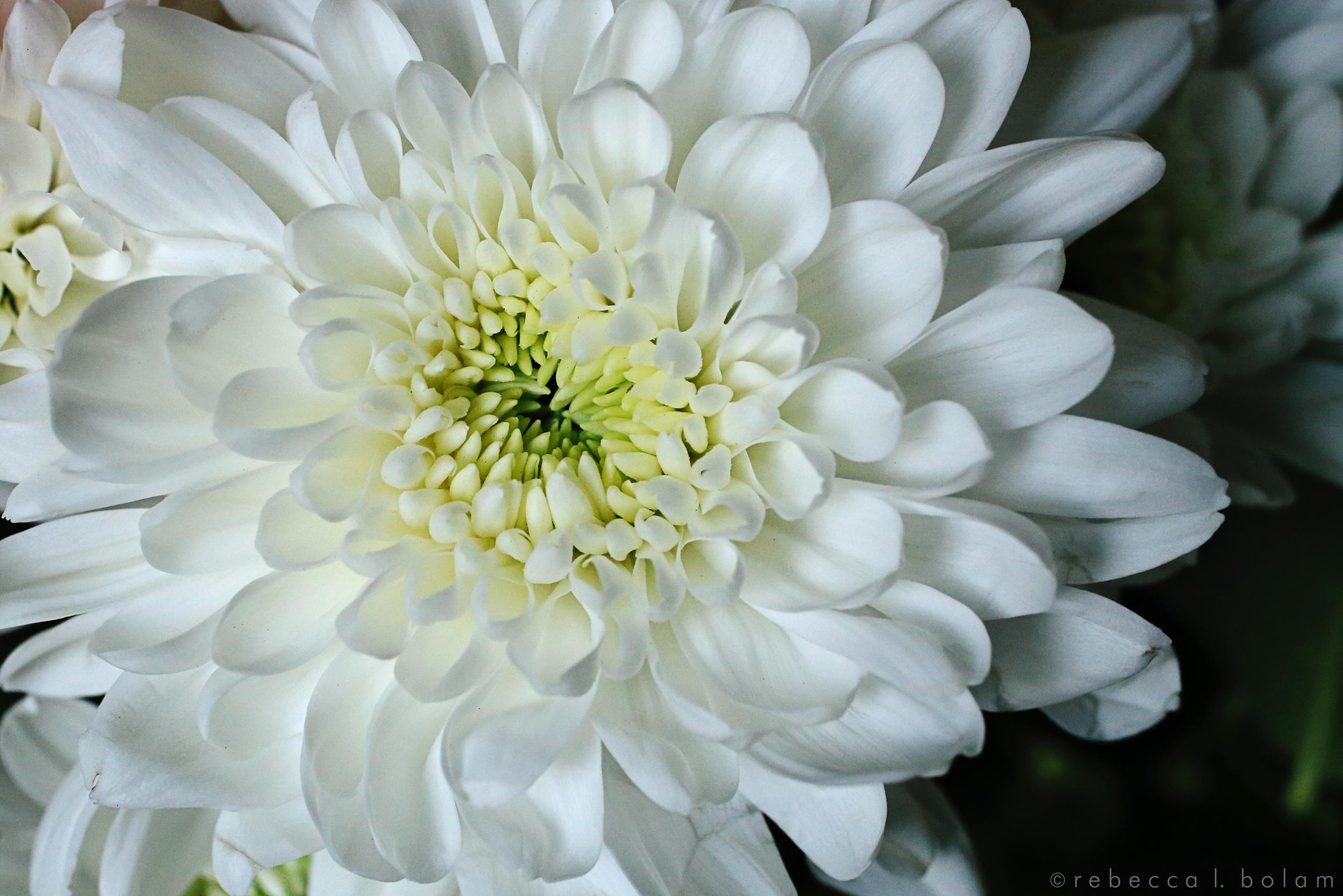 White Flower green center.jpg
