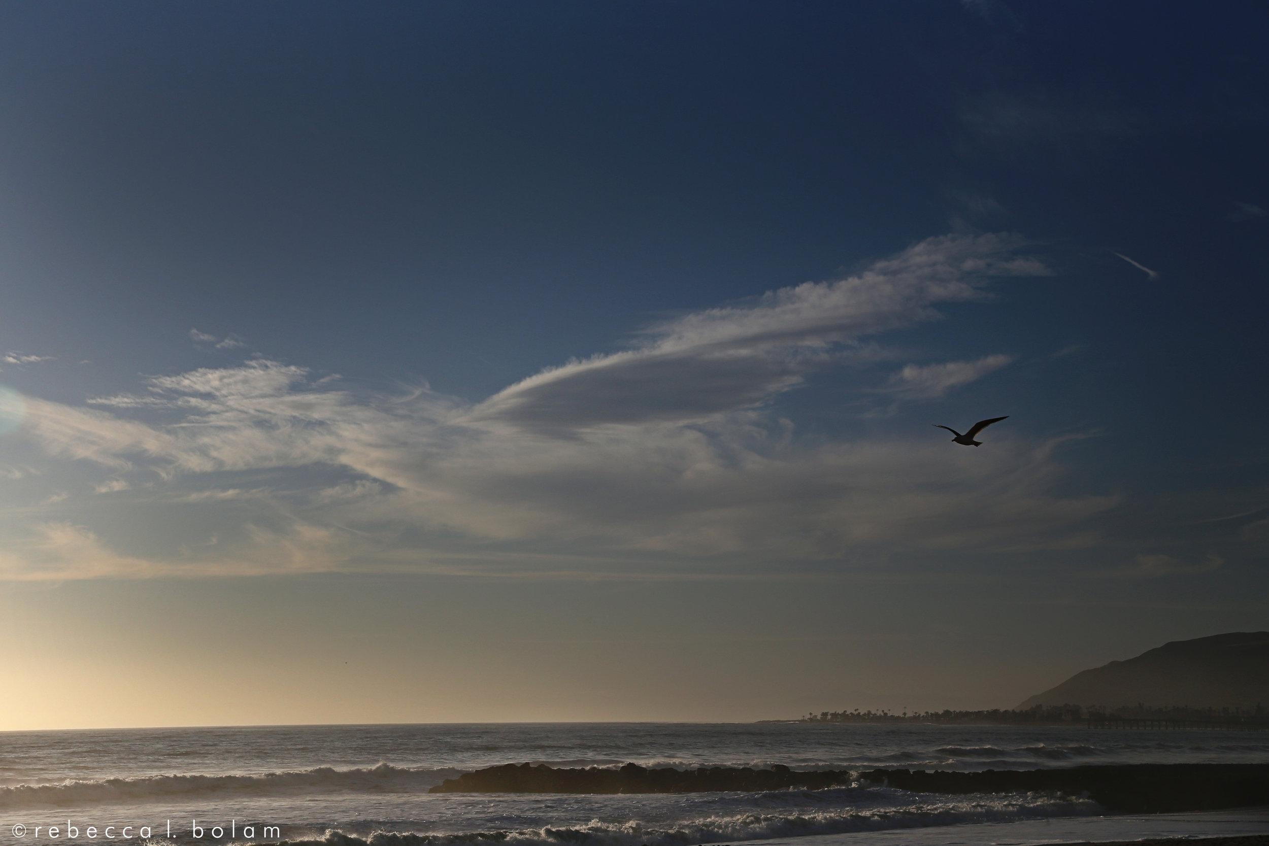 Bird and Beach.jpg