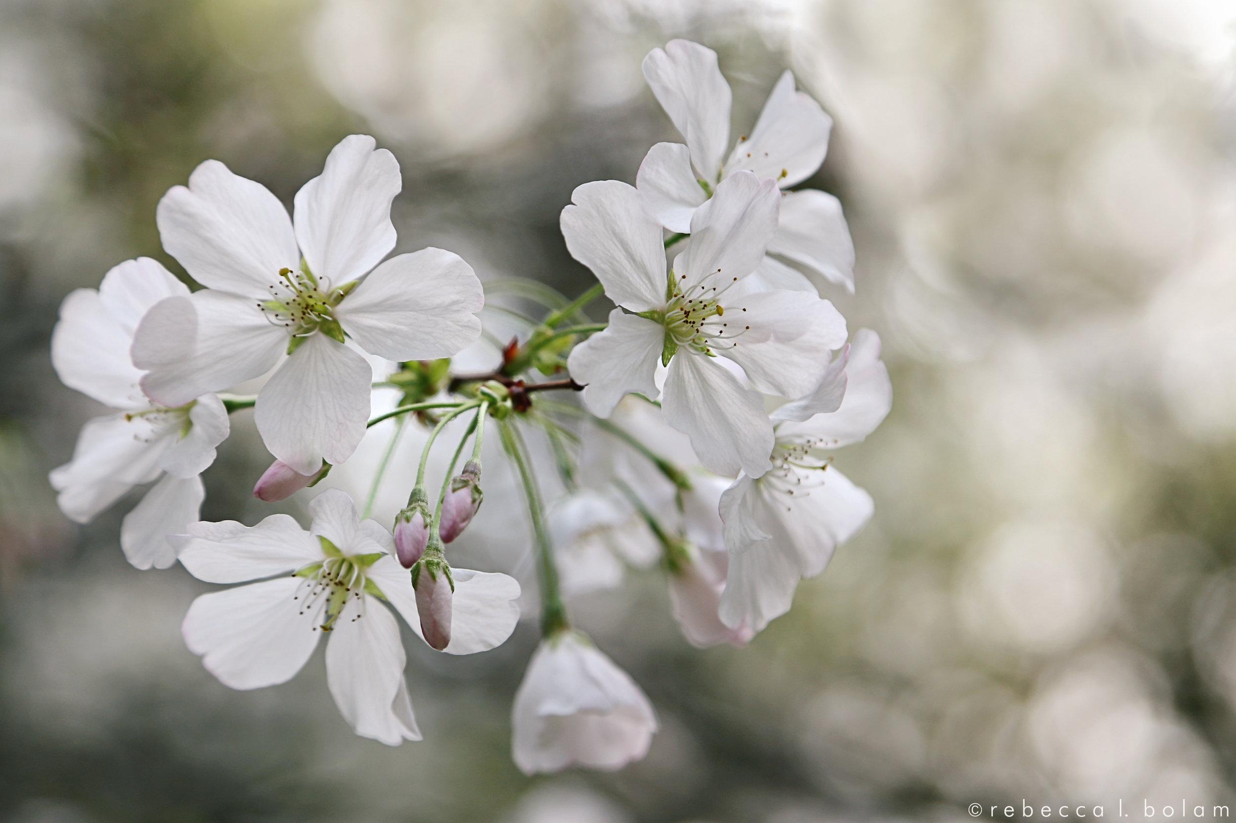 Desconso White Flowers Close wm.jpg