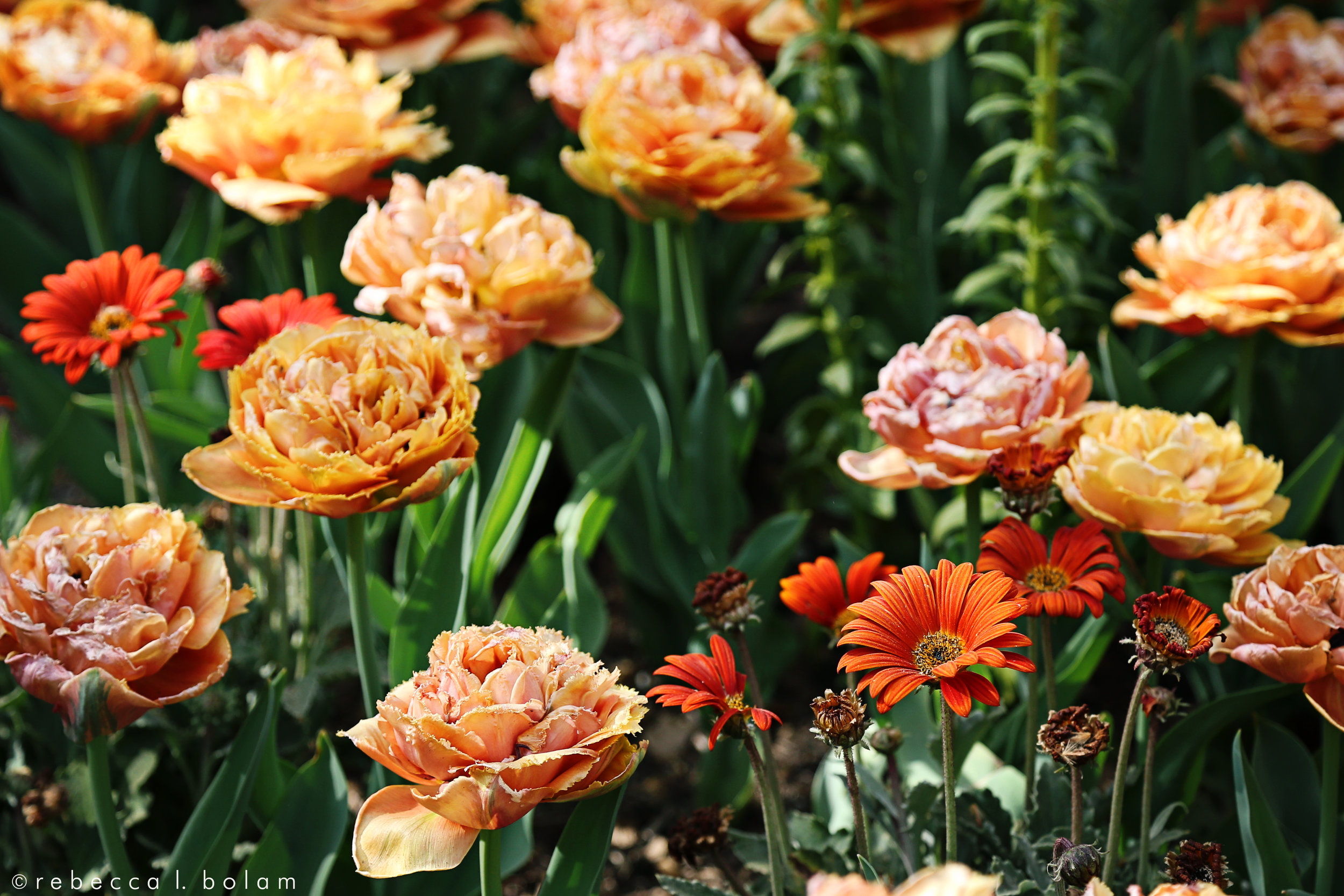 Descanso Orange Flowers.jpg