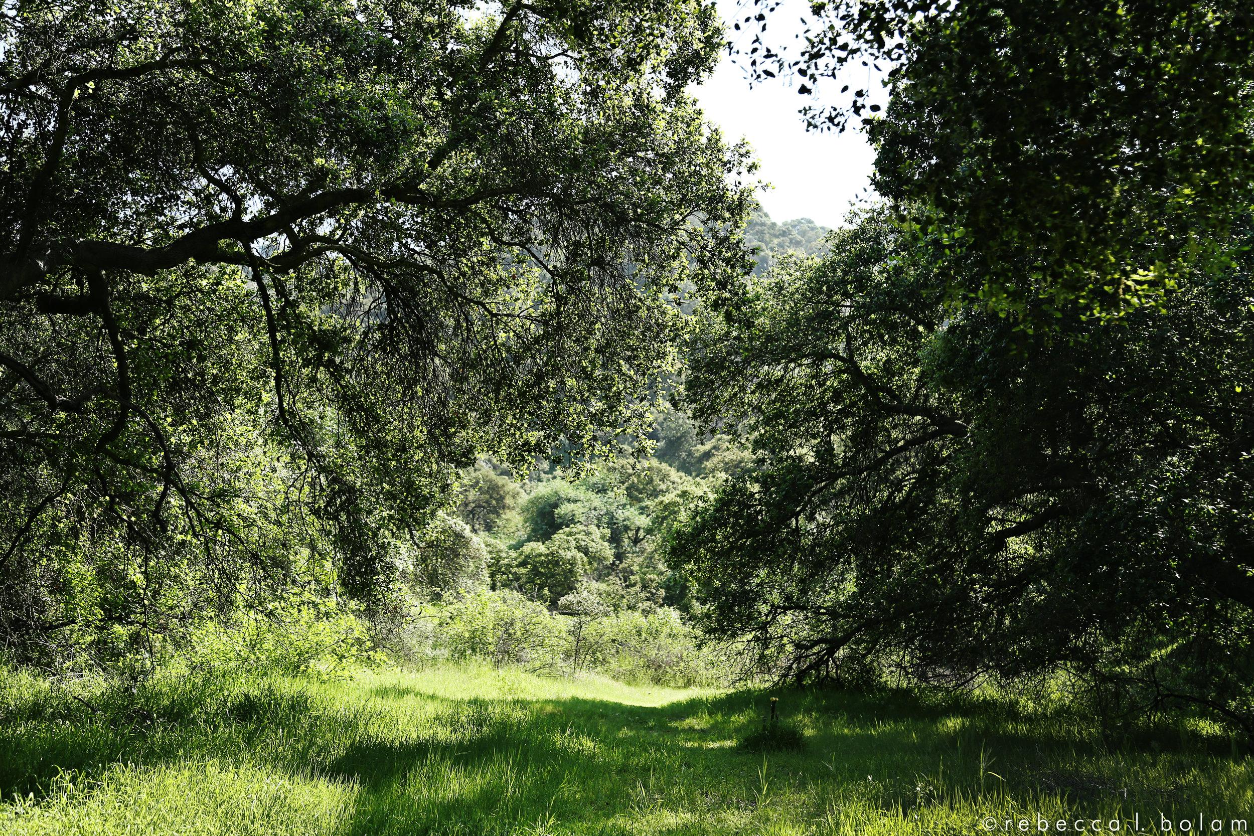 Green Trees Green Grass wm.jpg