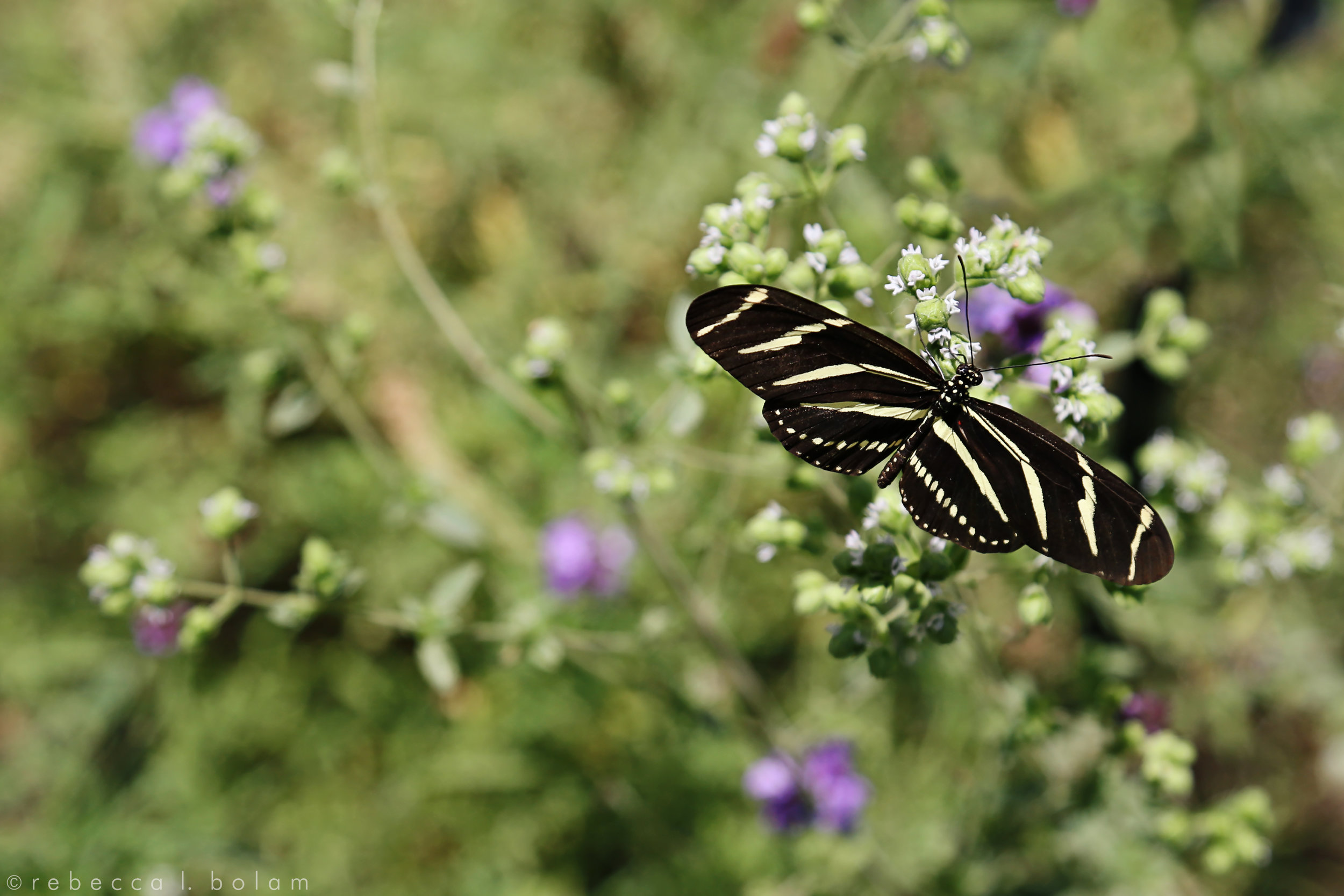 Black and Yellow Butterfly Green BG.jpg