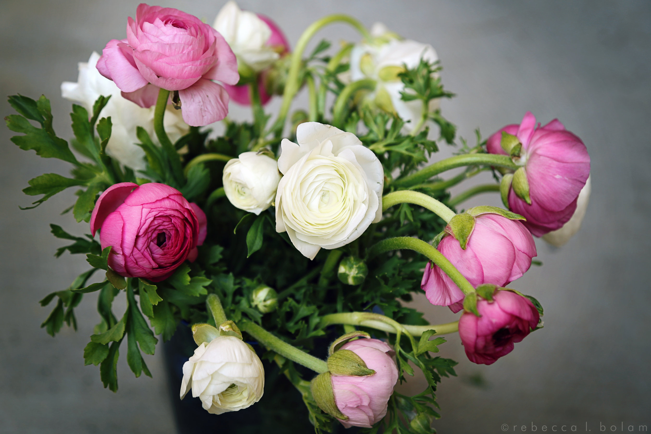 Buttercup Pink and White Flowers.jpg