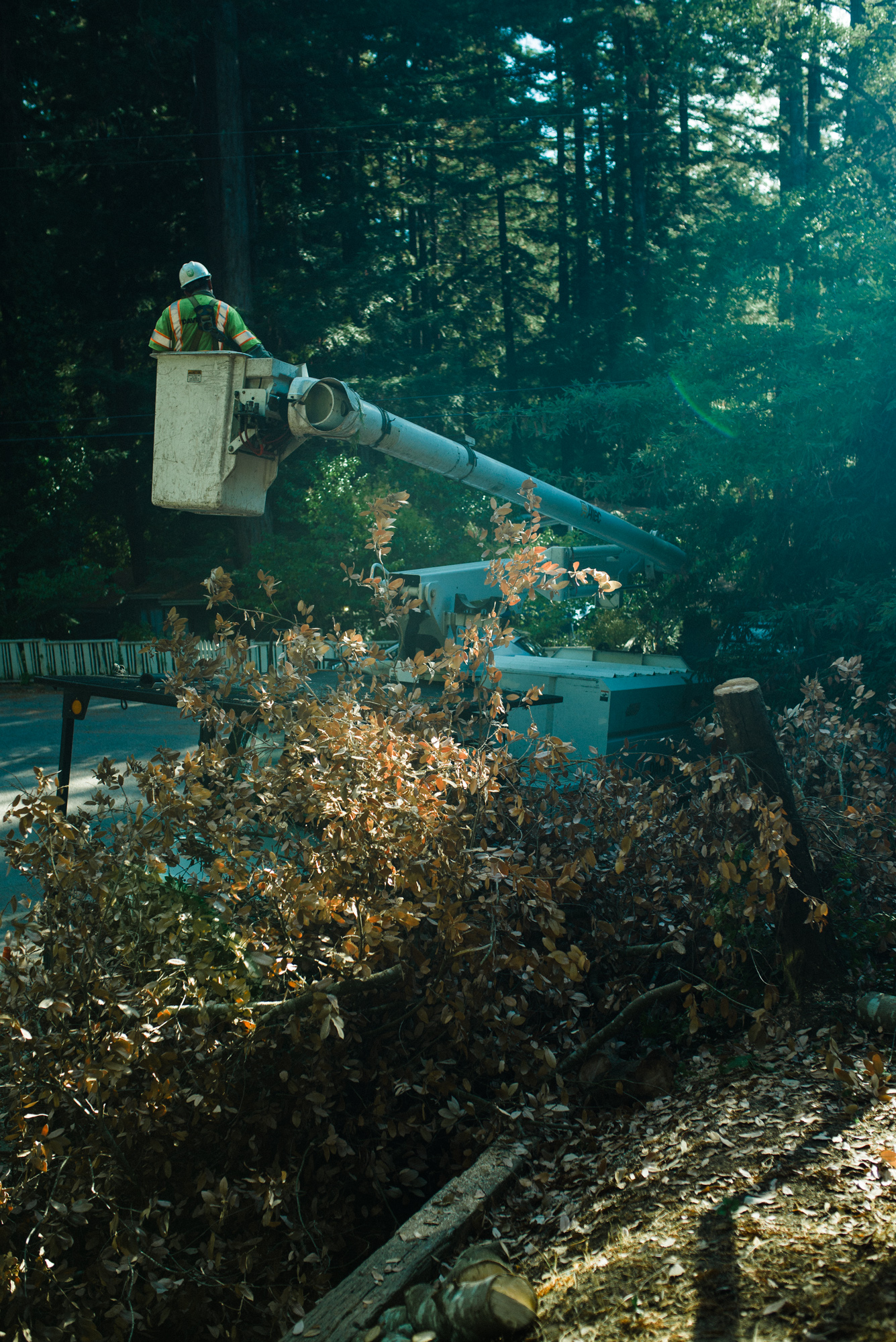 Tree workers remove marked tree in a neighborhood, September 2018.