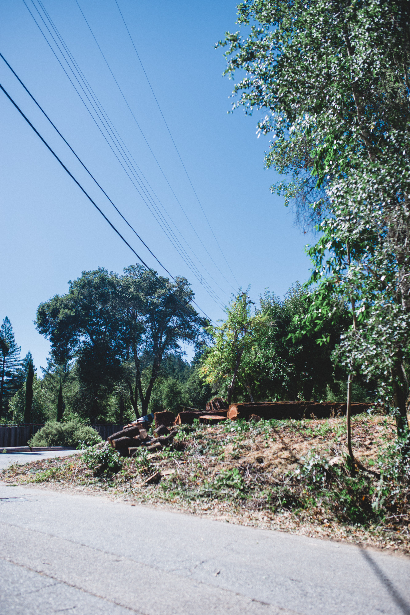 The stumps of coast redwood trees, removed for PG&E Wildfire Safety Program