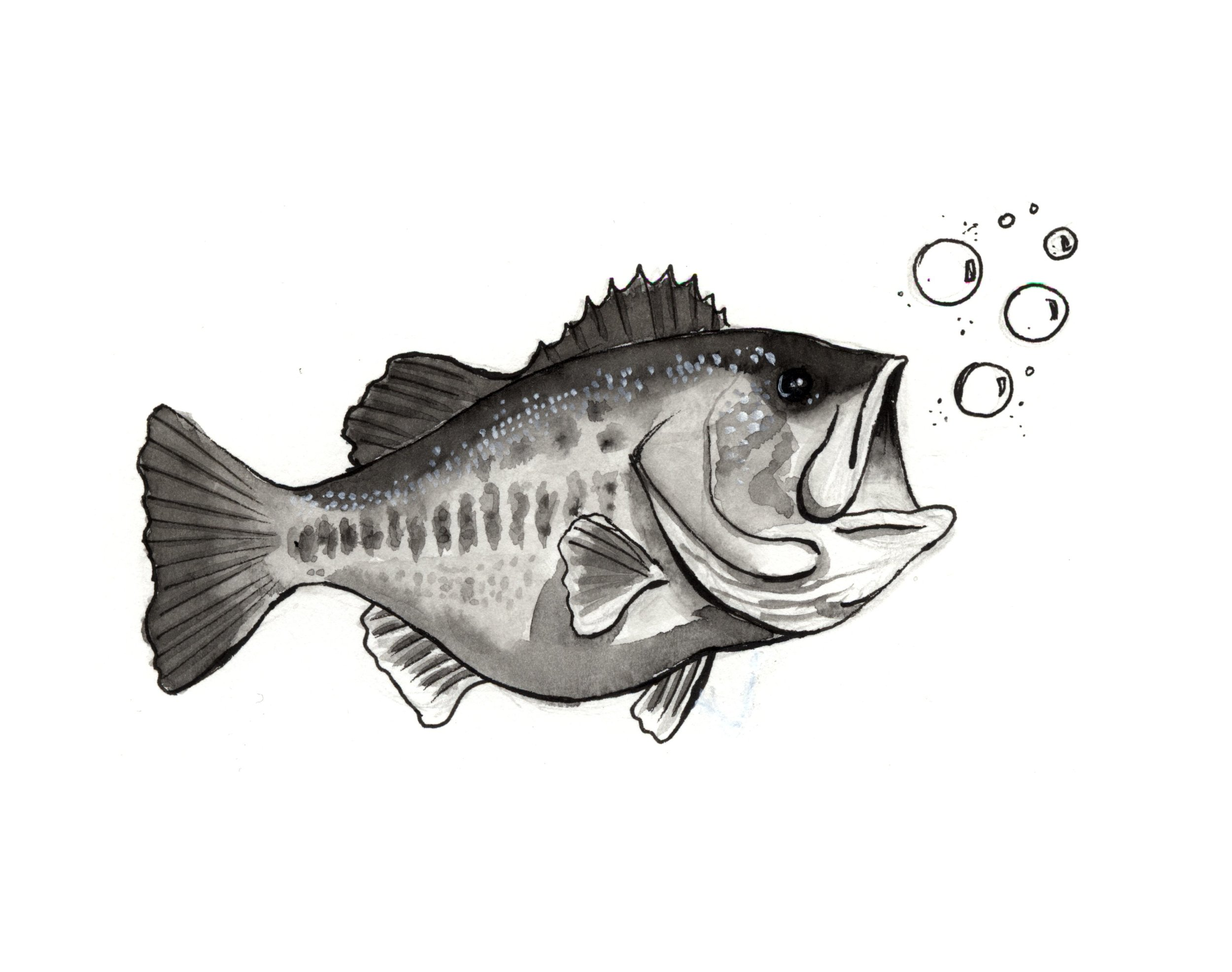 fish scaled_2.jpg