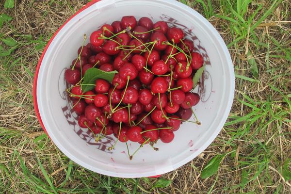 cherrypie07.jpg