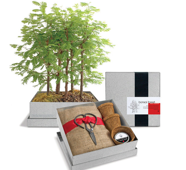 Bonsai Kit, Etsy, $50