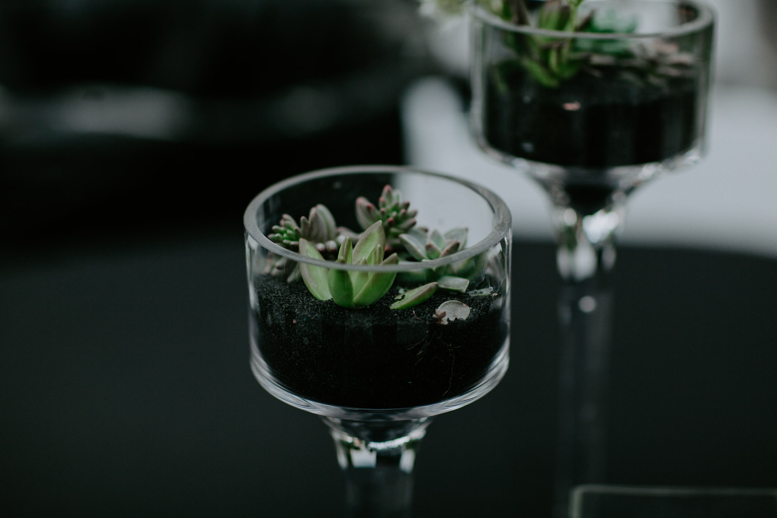 Table centerpieces of succulents in glass wine glasses