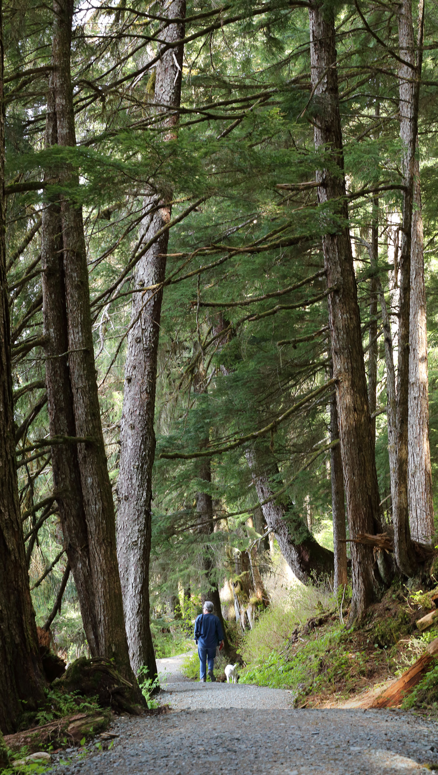 Auke Lake Trail has forested stretches and floating bridges on the lake.
