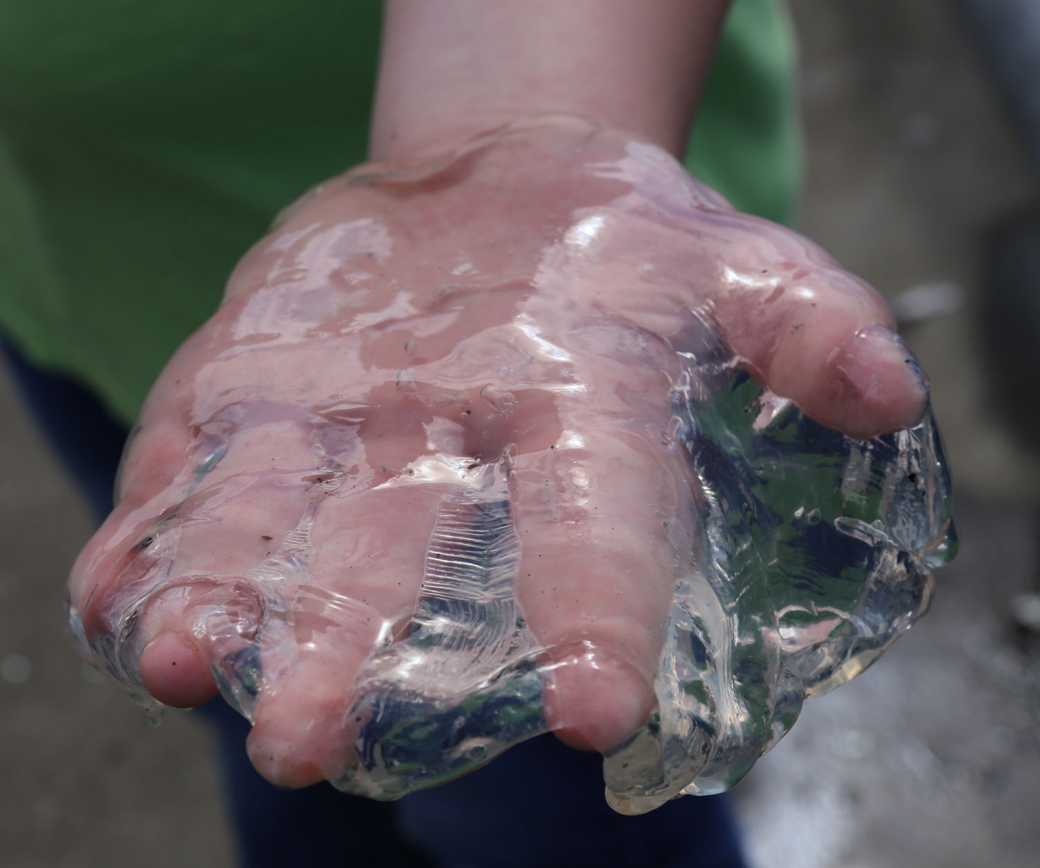Margaret holding a jellyfish.