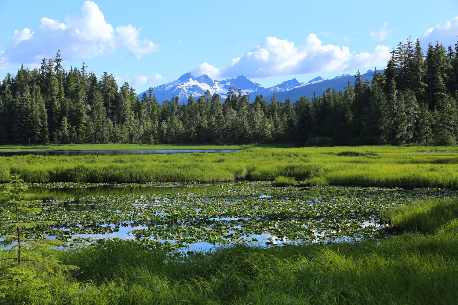 In mid-summer Pat's Lake, near Wrangell, is a good place to watch dragonflies.